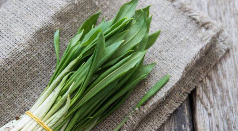 Выращивание лук черемша 6