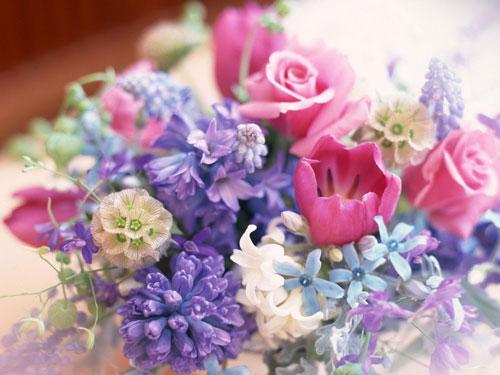 Комнатные цветы драцена, уход в домашних условиях