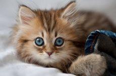 Как оригинально назвать кошку или кота на русском, японском и английском языках, а также какое значение имеют клички