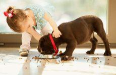 Рейтинг лучших витаминов для собак крупных и мелких пород: для суставов, костей и шерсти