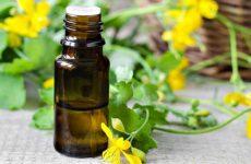 Трава чистотел в народной медицине: свойства, инструкция по применению, противопоказания