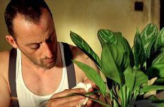 Домашние цветы: каталог с названиями и фотографиями, уход за растениями и самые неприхотливые виды