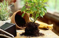 Как и чем вывести маленьких мошек из комнатных растений: способы