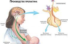 Норма пролактина у женщин и мужчин по возрасту