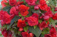 Самые теневыносливые и неприхотливые комнатные растения: названия и фото