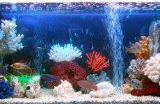 Для чего нужен компрессор в аквариуме, какие бывают виды, как его чистить и ухаживать