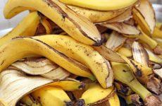 Банановая кожура и другие средства как удобрения для комнатных растений: подкормка в домашних условиях и способы приготовления своими руками