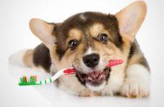 Причины, почему у собаки воняет из пасти тухлятиной, а также, что делать с неприятным запахом