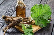 Применение корня лопуха: полезные свойства, рецепты для волос и противопоказания
