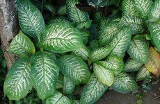 Комнатные цветы, которые нельзя держать дома: народные приметы и вредные комнатные растения