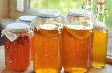 Польза и приготовление чайного гриба в домашних условиях