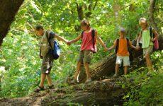 Свод правил поведения в лесу: для детей и школьников