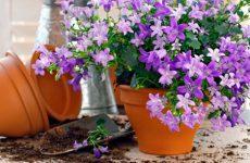 Циркон: стимулятор роста растений, применение